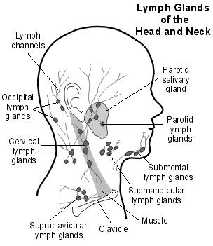 Neuroglossary  Neurotrauma Law Nexus