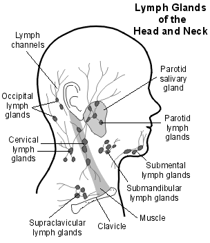 Swollen Lymph Glands (Lymph Nodes) - Causes, Treatment, Info | Patient