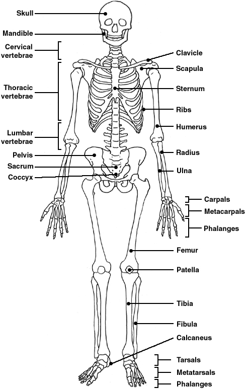 Skeleton Diagram Patient