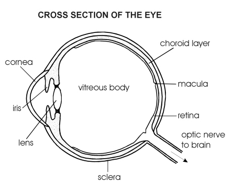 Eye side view | Diagram | Patient