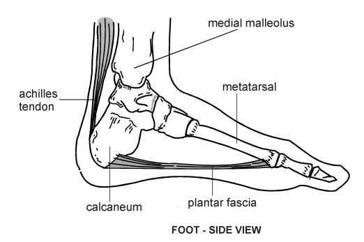 foot-sideview | diagram | patient, Human Body