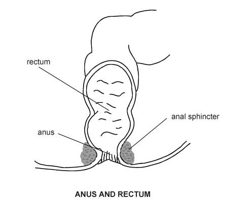Bad experiances the rectum and anus