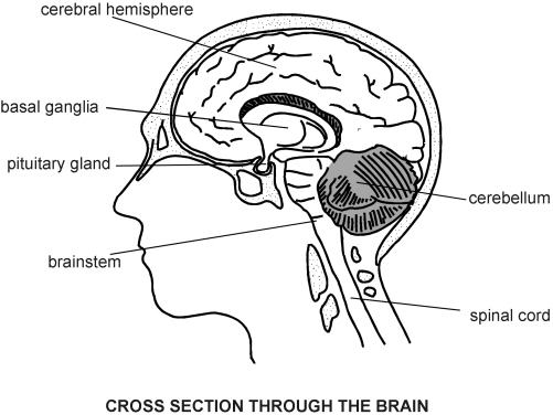 Brain Diagram Black And White Sectional Online Schematic Diagram