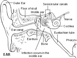 What medicine is used for an ear infection?